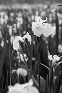 Flowers, Plants, etc.