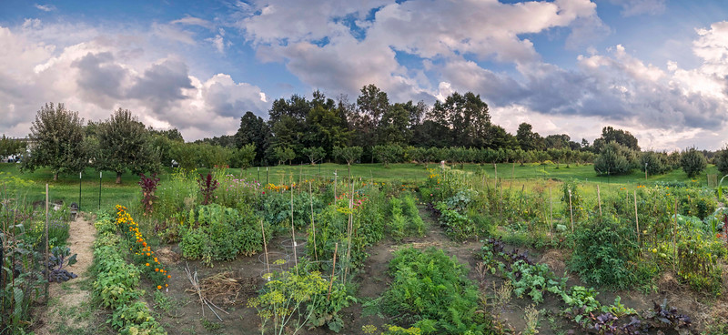 Late summer gardens, Beckwith's Orchard Community Garden, Kent, OH 8-22-14